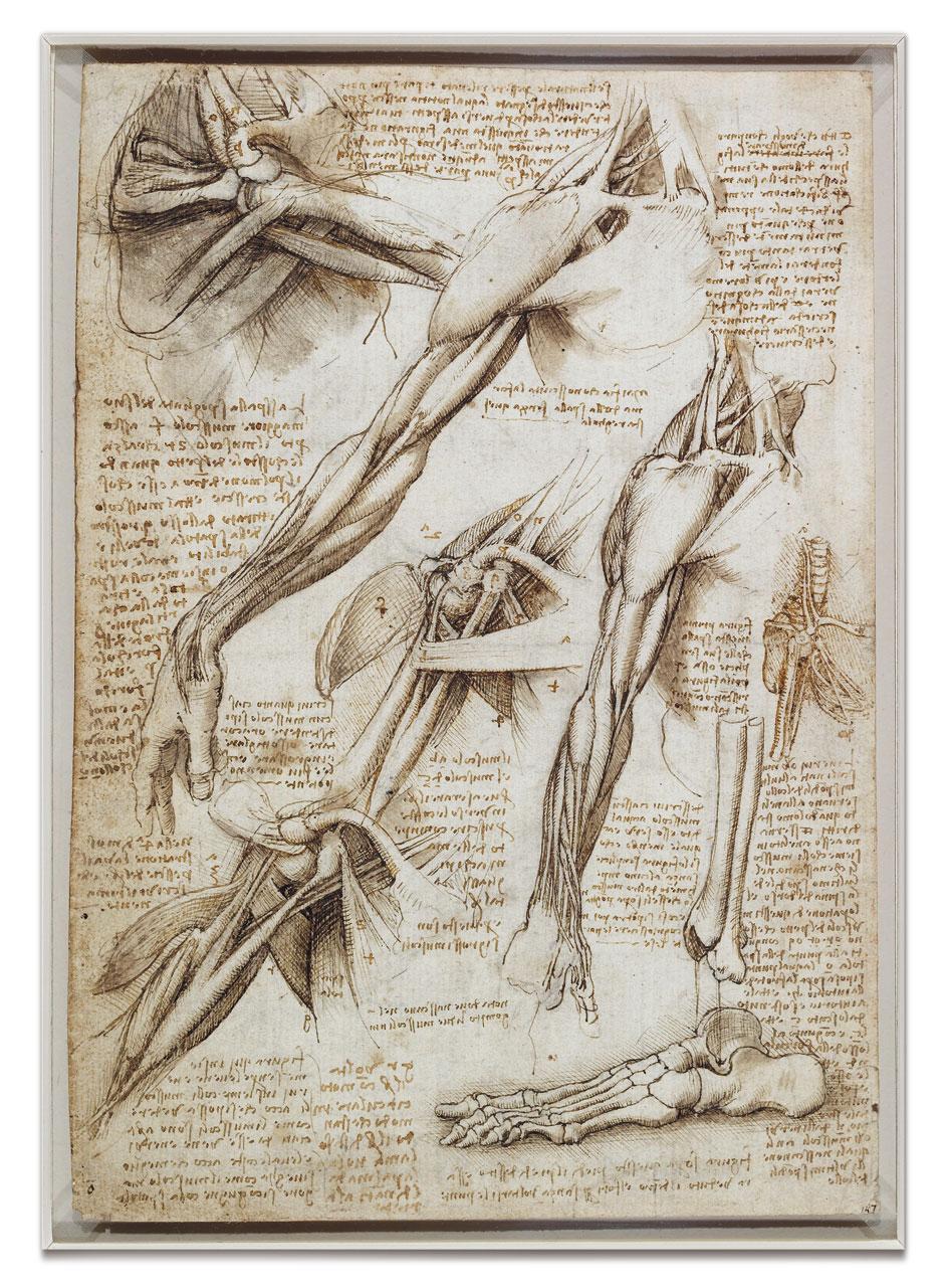 leonardo oil sketches