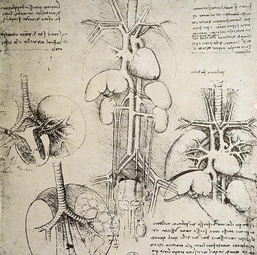 Leonardo da Vinci - the Anatomical Artist - Drawing Academy ...