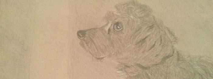 Drawing by Jasmine W.