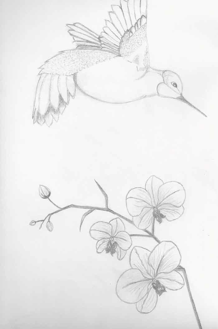 Drawing by Carolina
