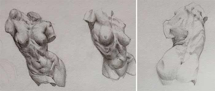 I want to learn anatomy